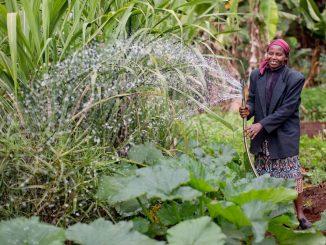 African farmers